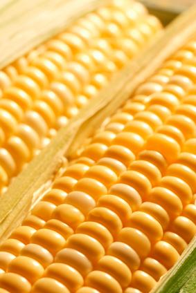 In Maiskolben wurden die springenden Gene, Transposons genannt, einst entdeckt. Heute helfen Transposons Wissenschaftlern dabei, die Funktion von Genen aufzuklären.