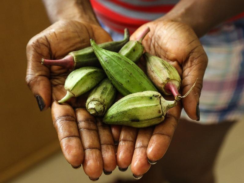 Die Okra zählt zu den ältesten Gemüsepflanzen der Welt und steht mit auf der Liste der Orphan Crops. (Bildquelle: © Antoshananarivo/Wikimedia.org/CC BY-SA 4.0)