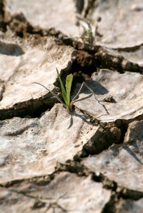 Pflanzen in extrem salzigen Böden leiden unter Salzstress. (Quelle: © iStockphoto.com/ Yiannos Ioannou)