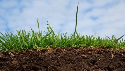 Auch im sauren Boden können bestimmte Mirkoorganismen wieArchaeen überleben. Sie sind in der Lage, Ammoniak, das bei biologischen Abbauprozessen im Boden entsteht, in Nitrat umzuwandeln. Archaeen sind daher auch für die Pflanzenforschung interessant, da Nitrat ein wichtige Nährstoffquelle für Pflanzen.