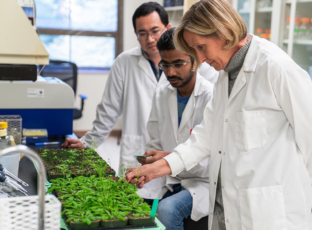 Das Team im Labor: Xiaodong Yang (links), Hardik Kundariya (mitte) und Sally Mackenzie (rechts) bei der Erforschung des Gedächtniseffekts.