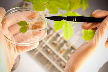 Wissenschaftler liefern durch Grundlagenforschung wichtige Erkenntnisse