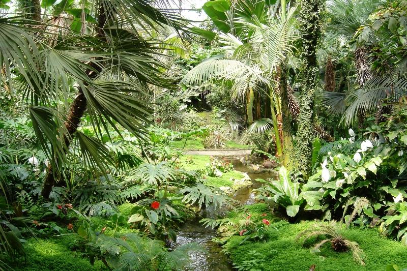 Nach neuesten Erkenntnissen setzen Pflanzen nicht nur Sauerstoff, sondern auch das Klimagas Methan frei. (Bildquelle: © Makrodepecher/ pixelio.de)
