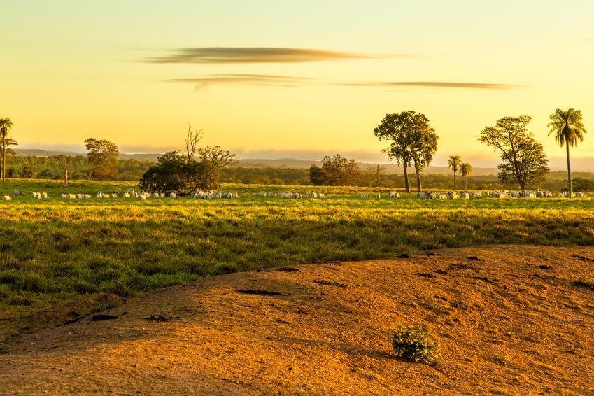 Abweichungen im Experiment: Das Standard-LCA nimmt für ganz Brasilien an, dass es größtenteils mit tropischem Regenwald bedeckt ist. Das neue LUCI-LCA ermittelte durch seine bessere räumliche Auflösung hingegen, dass der größte Teil der Anbaufläche in Mato Grosso im Bereich der Savanne stattfinden würde und nur zu einem geringen Teil im Bereich des Regenwaldes, wodurch die Treibhausgasfreisetzung deutlich geringer ausfallen würde.