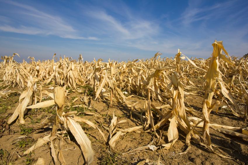 Die Zunahme von Dürren ist eine befürchtete Folge des Klimawandels.