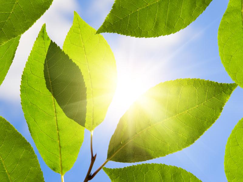Eine innere Uhr hilft Pflanzen im Tag-Nacht-Rhythmus zu bleiben und ihre Ressourcen zu schonen. (Quelle: © iStockphoto.com/Igor Chaykovsky).
