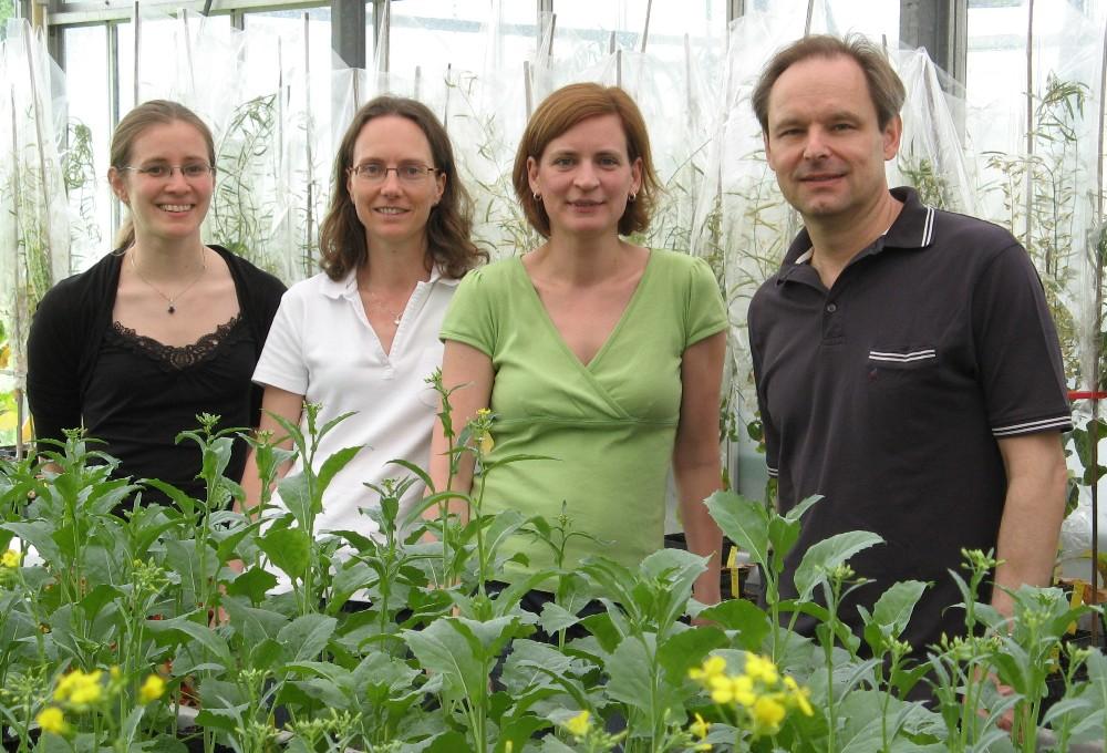 Das Team von GABI-GROWTH in der Angewandten Genetik des Dahlem Centre of Plant Sciences (FU Berlin). Von links nach rechts: Elisabeth Otto, Andrea Arbeiter, Isabel Bartrina, Thomas Schmülling