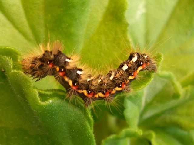 Wenn Pflanzenschädlinge zubeißen, holt sich die Pflanze Hilfe. Mit flüchtigen Duftstoffen lockt sie die Fressfeinde des Schädlings an und warnt gleichzeitig ihre Nachbarn. (Quelle: © tokamuwi / www.pixelio.de)