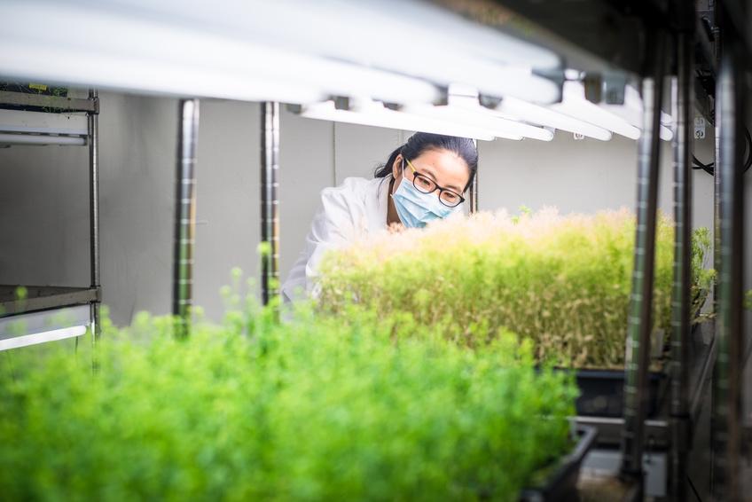 Die Förderung des wissenschaftlichen Nachwuchses inder Pflanzenforschung ist ein Schwerpunkt der BMBF-Förderrichtlinie