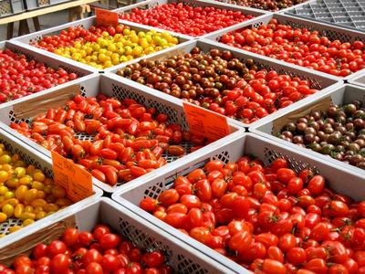 Auch wenn sich die vielen Tomatensorten in ihrem Erscheinungsbild mitunter stark voneinander unterscheiden, ähneln sie sich bezogen auf ihr Erbgut stärker als man denkt. Dass sich trotz der genetischen Ähnlichkeit so viele Farben und Formen bilden, lässt daher auf epigenetische Ursachen schließen.