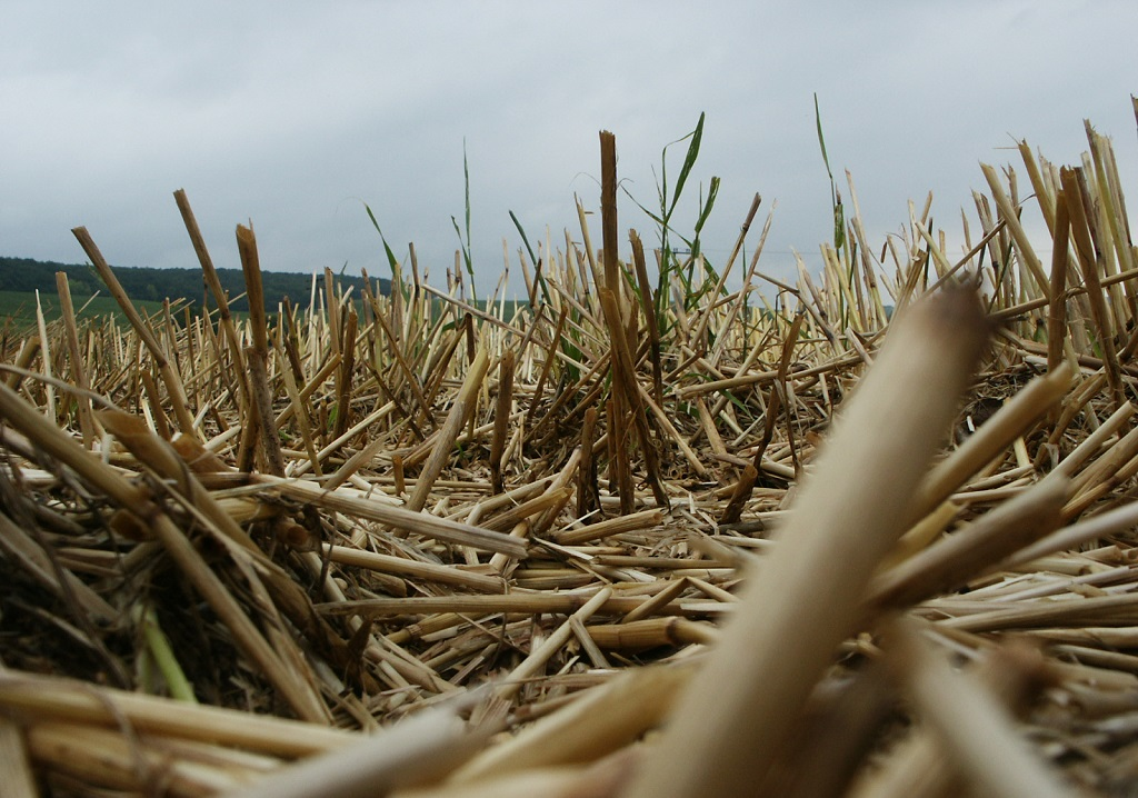 Stagnierende Ernten reduzieren die Bodenfruchtbarkeit. Das Management von Ernterückständen - im Bild ein Stoppelfeld - wird allein nicht ausreichen, den Effekt abzufedern. (Bildquelle: © Wolfgang Dirscherl / pixelio.de)
