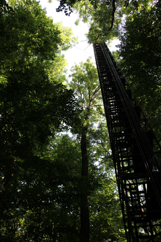 Die Abteilung Bioklimatologie der Fakultät für Forstwissenschaften und Waldökologie der Universität Göttingen ist mit einem meteorologischen Messsturm im Nationalpark Hainich am Mess-Netzwerk ICOS beteiligt.