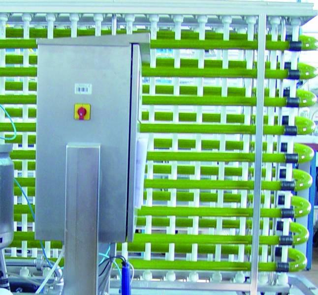 Anzucht der Algen in einem Röhrenphotobioreaktor (Quelle: © Hochschule Anhalt)
