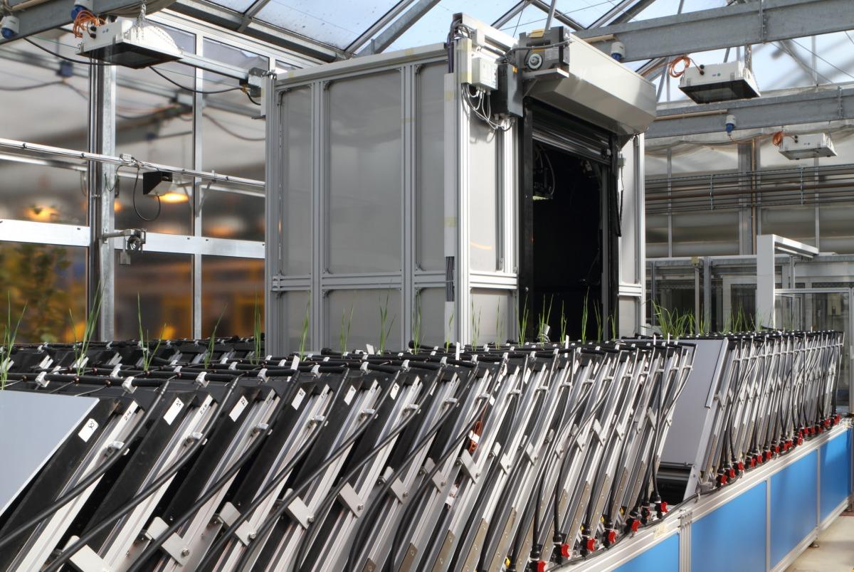 In sogenannten Rhizotronen werden Pflanzen großgezogen, um das Wachstum ihrer Wurzeln zu untersuchen. 100 Rhizotrone können pro Tag analysiert werden.