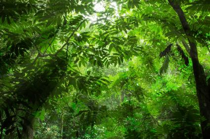 Ein institutionalisierter Schutz der Wälder ist unerlässlich