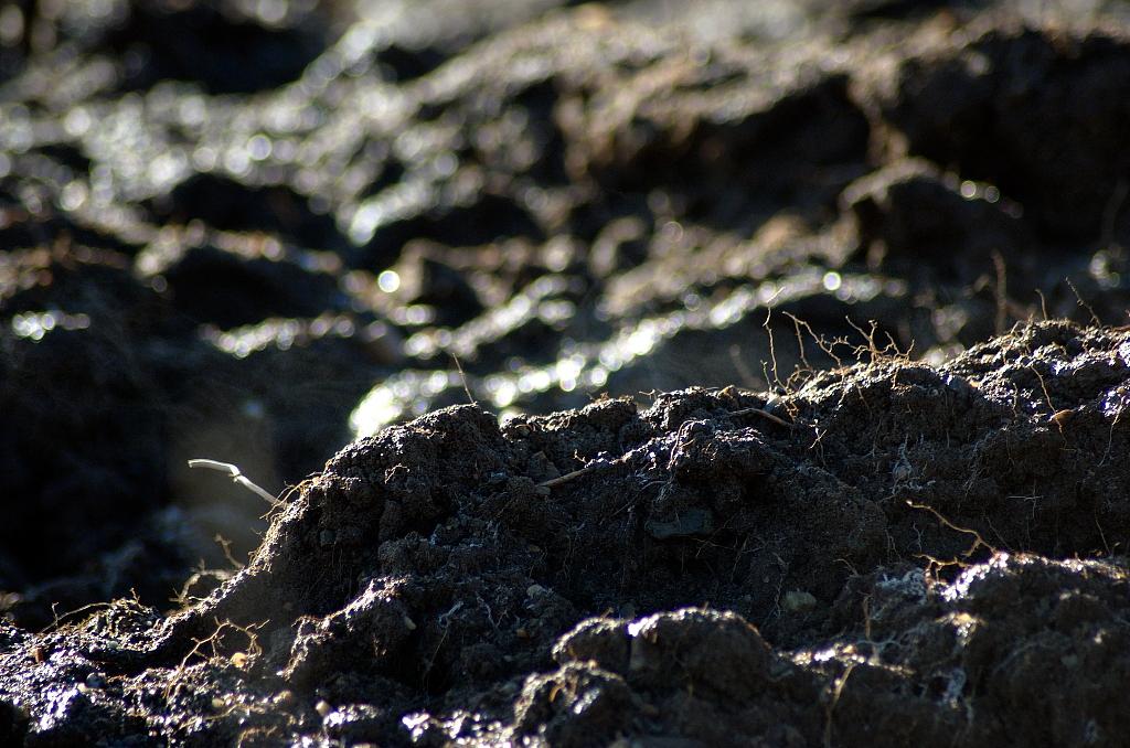 So unersetzbar und lebenswichtig Böden sind, so wenig ist nach wie vor über sie bekannt. (Bildquelle: © Günter Havlena  / pixelio.de)