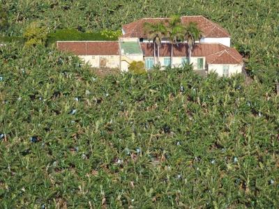 Plantagen liefern stabile Erträge und sind eine lukrative Anbaumethode für Landwirte. Mit dem Anbausystem sind jedoch auch zahlreiche negative Assoziationen verbunden: Sklaverei, Kolonie, Ausbeutung, Brandrodung und Monokultur.