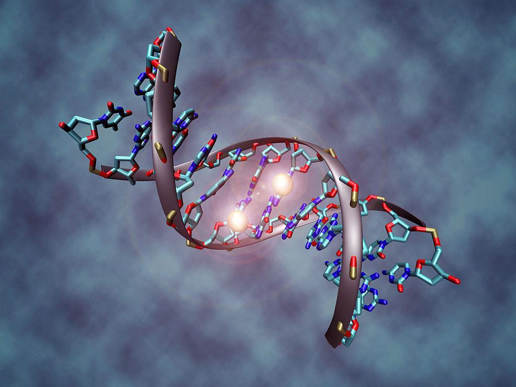 Eine der bekanntesten epigenetischen Veränderungen ist die Methylierung der DNA-Base Cytosin. Das Bild zeigt Methylgruppen (helle Punkte), die sich an das DNA-Molekül bzw. die DNA-Base Cytosin anhängen.