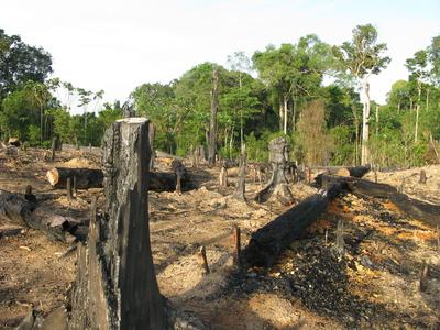Die Umwandlung von Wald in Agrarflächen führt der Studie zufolge zu massiven Beschleunigungseffekten beim Kohlenstoffumsatz.