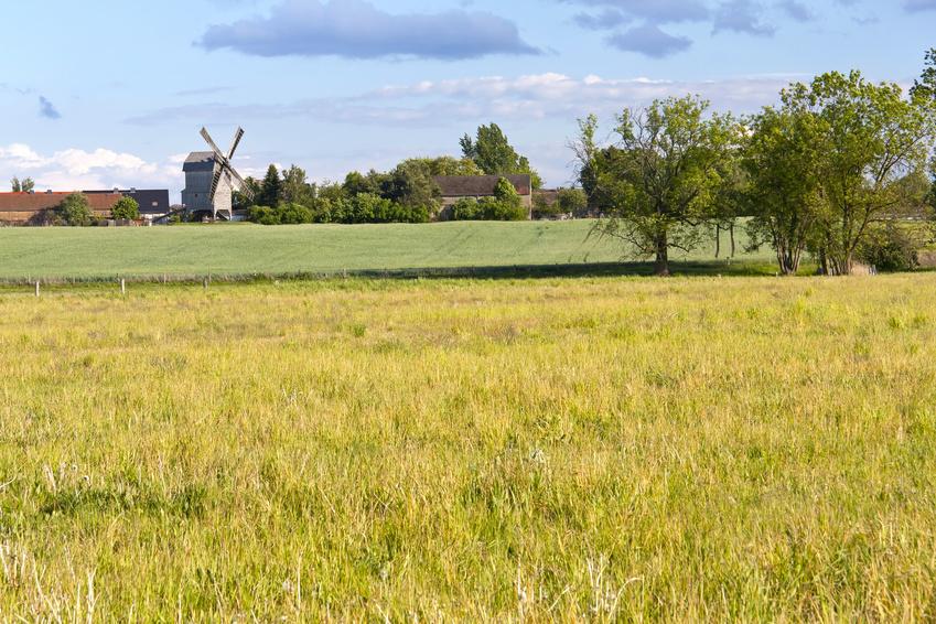 Viele der in Berlin konsumierten Agrarprodukte könnte regional in Brandenburg produziert werden.