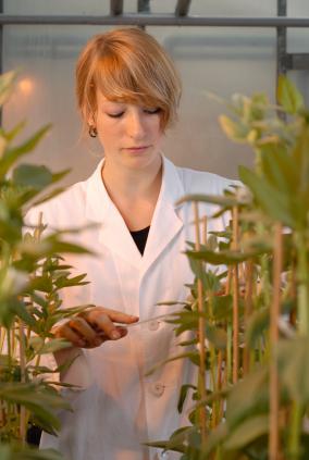 Pflanzenzüchterin im Labor. (Quelle: © iStockphoto.com/ Andreas Reh)
