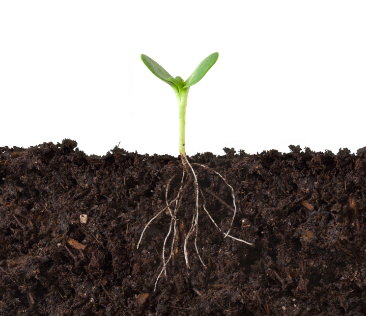 Pflanzen sind darauf angewiesen, dass ihre Wurzeln ausreichend Nährstoffe aus dem Boden aufnehmen. (Bildquelle: © iStock.com/ KateLeigh)