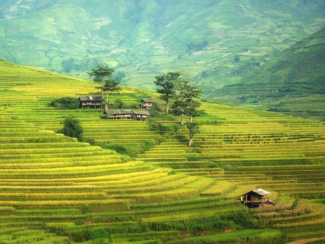 Eine moderate Düngung mit anorganischem Stickstoff kann den Landverbrauch beim Reisanbau in China verringern.