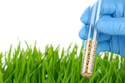 Viele Forschungsvorhaben für eine der wichtigsten Ertragspflanzen.