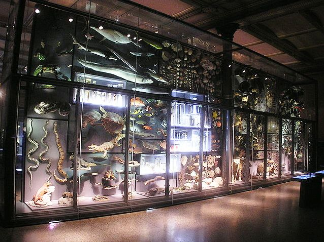 Das Museum für Naturkunde Berlin zeigt an seiner