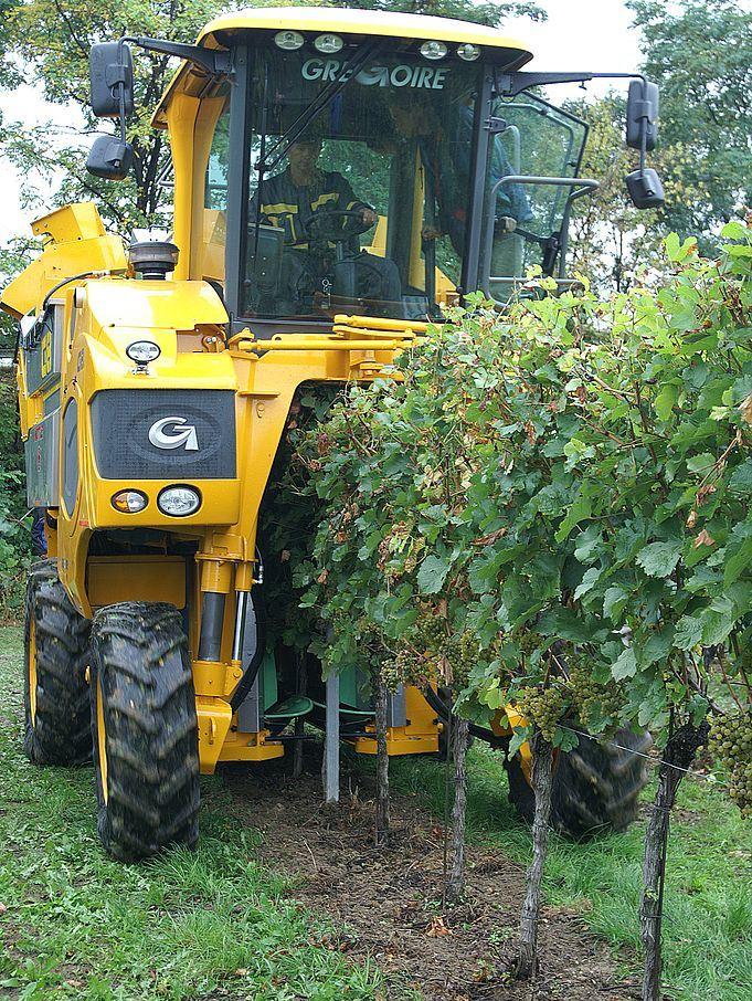 Vollernter sind im Napa Valley verpönt, was wiederum von Weinliebhabern geschätzt wird. Denn die Trauben werden ohne kritischen Blick einfach abgeerntet. Allerdings spart es Zeit und Kosten – und schont die Umwelt.