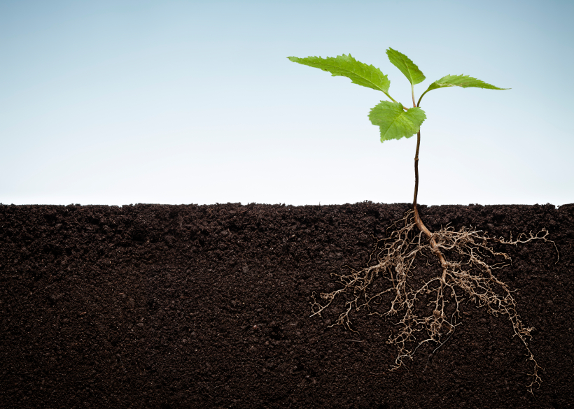 Auf den ersten Blick nicht erkennbar: Im Boden tobt ein Kampf um Ressourcen. Diese pflanzliche Kriegsführung mithilfe von Chemikalien heißt Allelopathie. (Bildquelle: © iStock.com/Thomas Vogel)