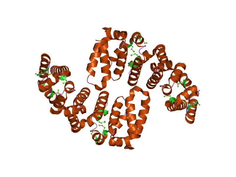 Schema eines Hitzeschockproteins HSP70, das gemeinsam mit anderen Hitzeschockproteinen den Hauptregulator HsfA1s reguliert.