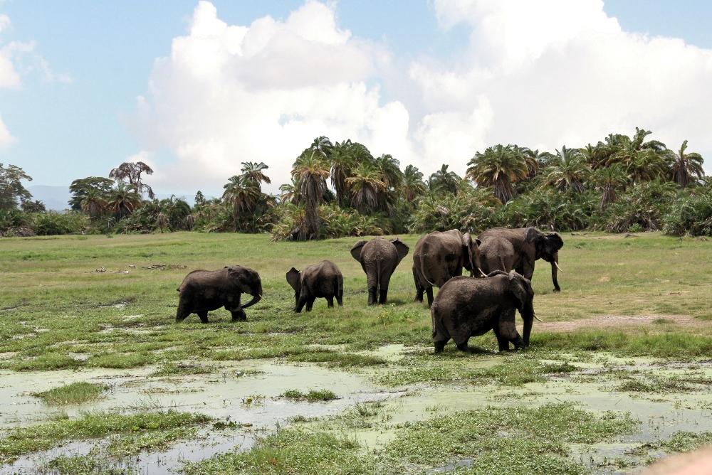 Savannen sind aufgrund ihrer Ausdehnung wichtige CO2-Senken (Quelle:© Ulla Trampert / PIXELIO - www.pixelio.de)