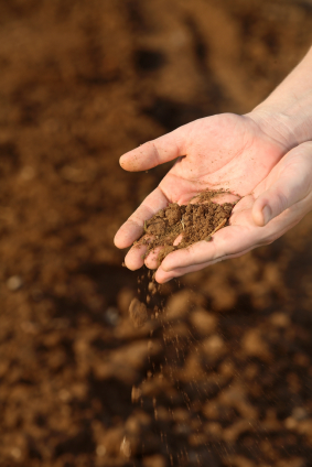 Der Ökolandbau bindet mehr Kohlenstoff aus der Atmosphäre in die organische Bodensubstanz zurück. (Quelle: © iStockphoto.com/ hagit berkovich)
