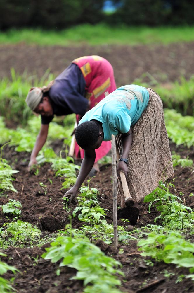 Frauen stellen über 40 % der Arbeitskraft in der Landwirtschaft, sind in der Forschung jedoch unterrepräsentiert.