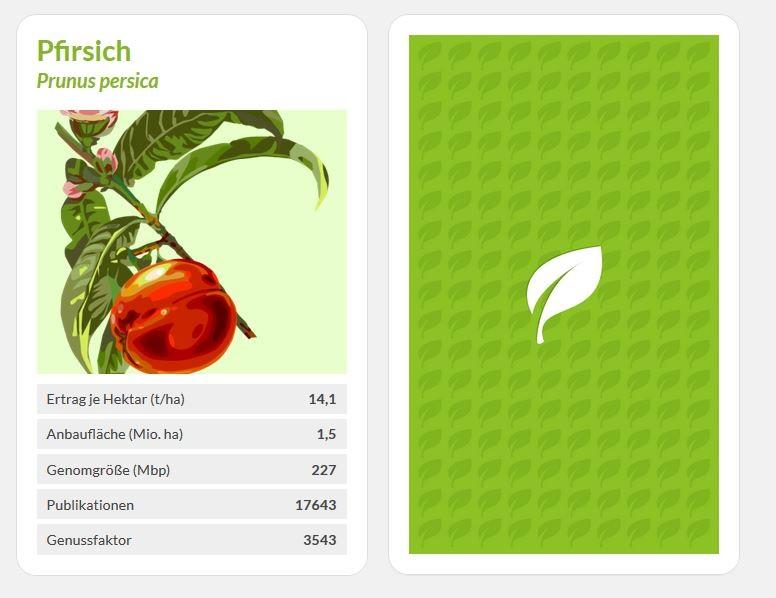 Jetzt spielen: Lernen Sie spielend 24 Superstars der Pflanzenforschung kennen und stellen Sie sich dem Duell mit dem Computer. (Zum Starten einfach die Spielkarten anklicken.)