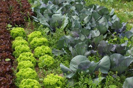 Die ökologische Landwirtschaft ist rechtlich verpflichtet, auf chemische Pflanzenschutzmittel, Mineraldünger und den Einsatz transgener Pflanzen zu verzichten.