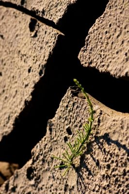 Zunehmende Dürreperioden bedrohen auch die Pflanzenvielfalt. (Quelle: © Harald Grunsky / www.pixelio.de)
