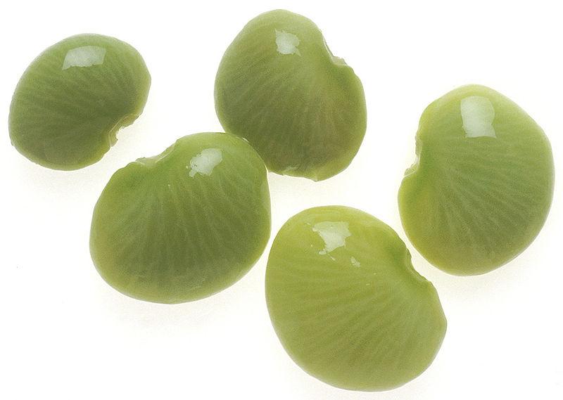 Die Samen der Limabohne. Duftstoffe von Nachbarpflanzen können das Immunsystem der Limabohnenpflanzen aktivieren.