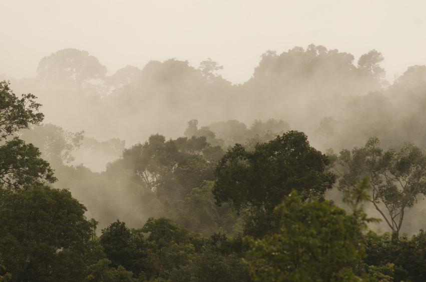 In den Tiefen des thailändischen Regenwaldes haben Wissenschaftler bisher unbekannte Pilze mit antibiotischen und nematiziden Eigenschaften entdeckt.