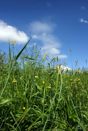 Verschiedene Pflanzenarten auf gemeinsamen Boden. (Quelle: © iStockphoto.com/ Duncan Walker)