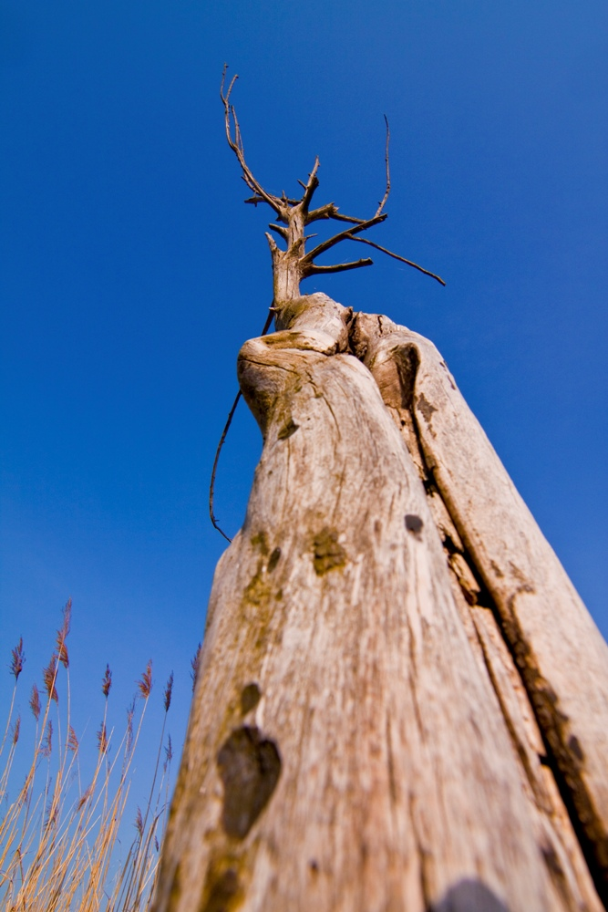 Klimaerwärmung hat negative Folgen für pflanzliche CO2-Senken (Quelle: © Ibefisch / PIXELIO www.pixelio.de)
