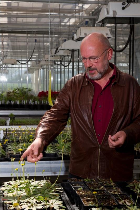 Joachim Schiemann, Leiter des JKI-Instituts für die Sicherheit in der Gentechnik bei Pflanzen, im Gewächshaus.