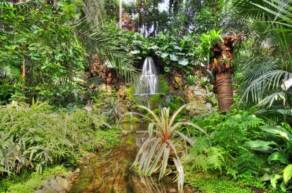 Die Vielfalt an Pflanzenarten ist in tropischen Regenwäldern sehr hoch, bezogen auf kleine Flächen sind Wiesen in gemäßigten Regionen jedoch artenreicher.
