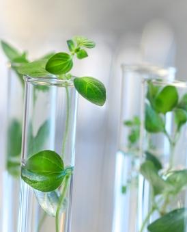 Bei der Pflanzenzüchtung dürfen die langfristigen Folgen neuer Züchtungen nicht aus dem Blick geraten.