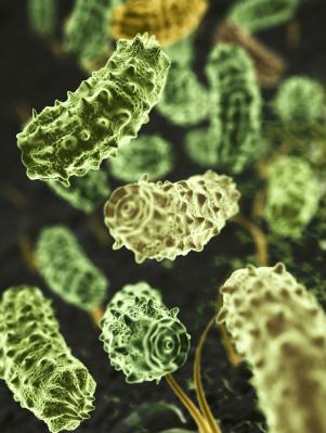 Pflanzliches Plankton im Interesse der Wissenschaft. (Quelle: © iStockphoto.com/ Konstantin Inozemtsev)