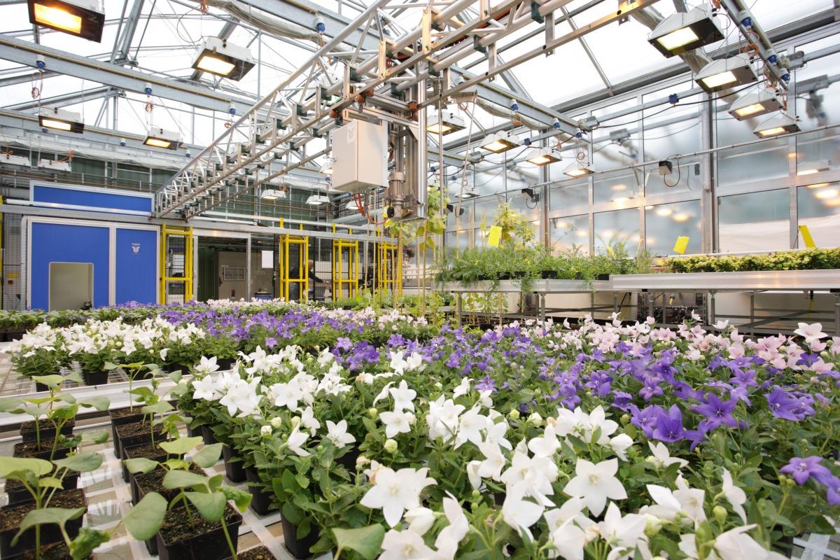 Ziel ist es, große Pflanzenzahlen zu phänotypisieren.
