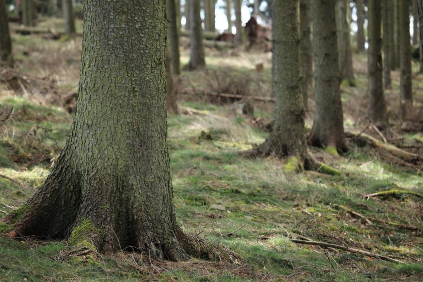 Netzwerken im Untergrund: Unter der Erde befindet sich ein dichtes Geflecht aus Baumwurzeln und Pilzfäden. (Bildquelle: © hecke71/Fotolia.com)