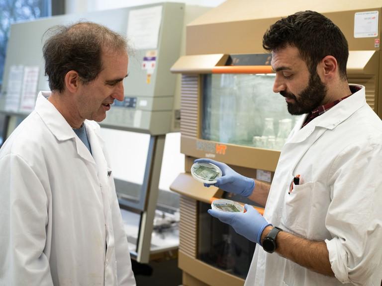 Prof. Dörmann (links) und sein Doktorand Mohammed Aizouqmit zwei verschiedenen Cyanobakterien-Kulturen.
