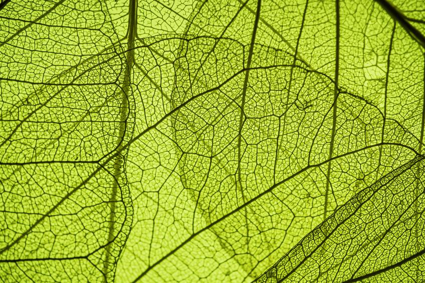 Das Enzym RNase E ist hochkonserviert und kommt auch in pflanzlichen Chloroplasten vor.